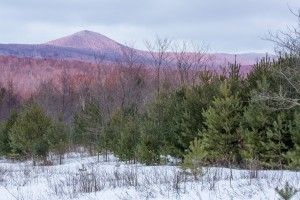 Proposed Jim Jeffords State Forest